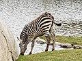 Grant Zebra (40676051734).jpg