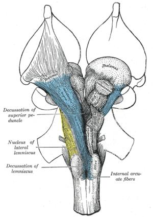 Medial lemniscus - Image: Gray 690
