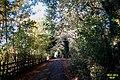 Green tunnel 2 (SLH) (12965690835).jpg
