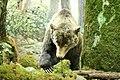 Grizzly Bear (3249411273).jpg