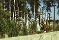 Groby na cmentarzu prawosławnym - nieznana - 000814s.jpg