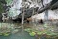 Grotte et nénuphars à Tam Coc (2).jpg
