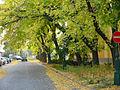 Gyula városkép3.jpg