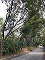 HK 香港北區North District 本地遊 行山 Hiking 大石磨 Tai Shek Mo hill mountain November 2020 SS2 47.jpg