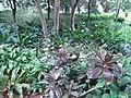 HK Kln Park forest trees green Oct-2012.JPG