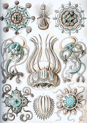 Enter the Void - Ernst Haeckel: Kunstformen der Natur (Art Forms of Nature)