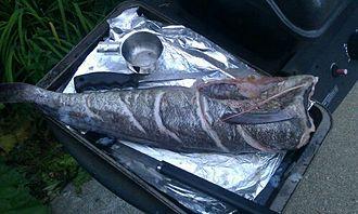 Hake - Grilled hake