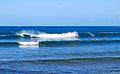 Haleiwa beach park (3).jpg