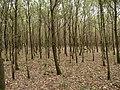 Hambach forest 18.jpg