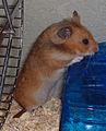 Hamster (1).jpg
