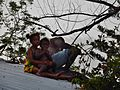 Hanging Out With Dad on the Roof (23694159481).jpg
