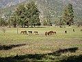 Haras Sausalito. - panoramio - R.A.T.P. (2).jpg