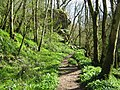 Harridge Wood, Nettlebridge. - panoramio (1).jpg