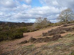 Hartlebury Common - Image: Hartlebury Common geograph.org.uk 1173539