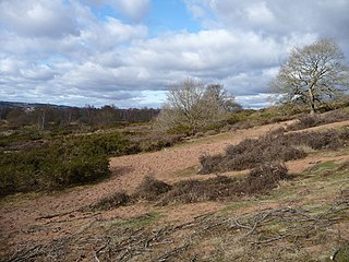 Hartlebury Common
