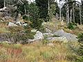 Harz Brocken Sept-2015 IMG 6362.JPG