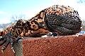 Heloderma suspectum -Arizona-Sonora Desert Museum-8a.jpg