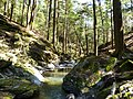 Hemlock Forest - panoramio.jpg