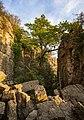 Hessigheim - Felsengärten - die Kluft mit der Eiche.jpg