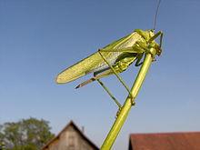 insecte elevage