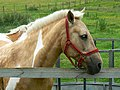 Horse in paddock at Ashbury, Oxfordshire, England.jpg