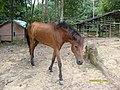 Horse park Unmul Red Soil - panoramio.jpg