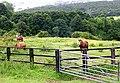 Horses in field off Smalewell Road - geograph.org.uk - 473076.jpg
