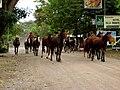 Horses on Ometepe.jpg