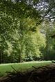 Hosenfeld Himmelsberg SCI 555520801 Pasture Fagus Coarse woody debris.png