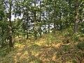 Hrastova šuma, Djerdap NP, Srbija (54).jpg