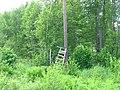 Hunter's short ladder - panoramio.jpg
