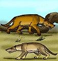 Hyaenodon gigas.jpg