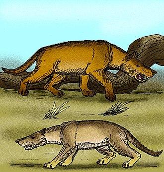 Hyaenodontidae - Hyaenodon gigas and H. mongoliensis