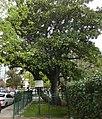 ID 353 Magnolia histórica 0860.jpg