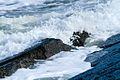 IJmuiden-beach-2013-10 (9043384145).jpg