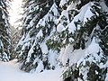Iarna în Balindru - panoramio.jpg