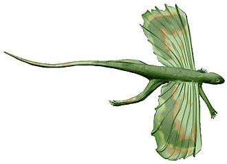 Sauria - Image: Icarosaurus white background