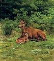 Iche et faon dans un sous-bois 2007 CKS 07403 0226 .jpg