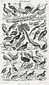 Illustration from A History of the Earth and Animated Nature by Oliver Goldsmith from rawpixel's own original edition of the publication 00034.jpg