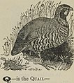 "Image from page 19 of ""An alphabet of animals"" (1865) (14597940258).jpg"