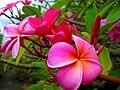 In the Kula botanical garden - panoramio (3).jpg