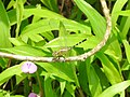 Insects from Madayipara DSCN2275.jpg