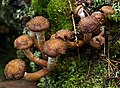 Isojärvi National Park - fungi 2.jpg