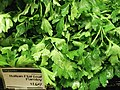 Italian flat leaf parsley.jpg