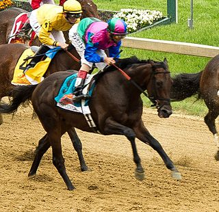 Itsmyluckyday American-bred Thoroughbred racehorse