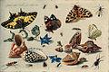 Jan van Kessel de Oude - Vlinders en andere insecten, mosselen, slakken etc.jpg