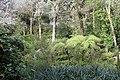 Jardin Feteira Rainha Sintra 8.jpg