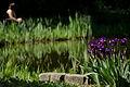 Jardin des plantes VI.jpg