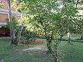 Jardinera UdeM B5.jpg