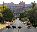 Javelinas Crossing Navahopi Road in Sedona, Arizona - a la The Beatle's Abbey Road Album!.jpg